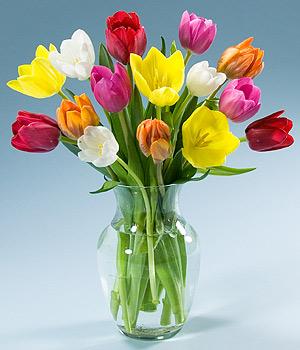 Тюльпаны - один из национальных символов Голландии.  Здесь они встречаются во всем своем многообразии: красные...