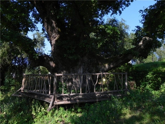 самые старые деревья подмосковья синтетическое белье подходит
