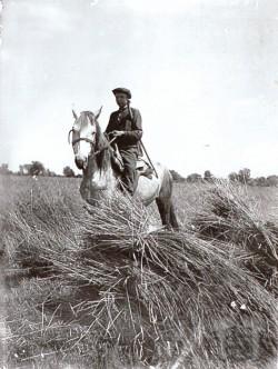 Охорона зерна від голодних селян. Фото territoryterror.org.ua