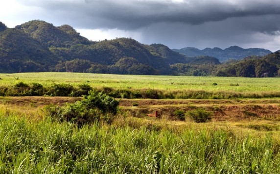 Національний парк Блакитні гори і гори Джона Кроу, Ямайка telegraph.co.uk