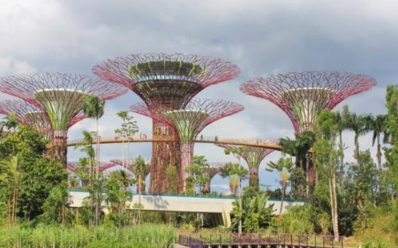 Сінгапурський ботанічний сад, Сінгапур telegraph.co.uk